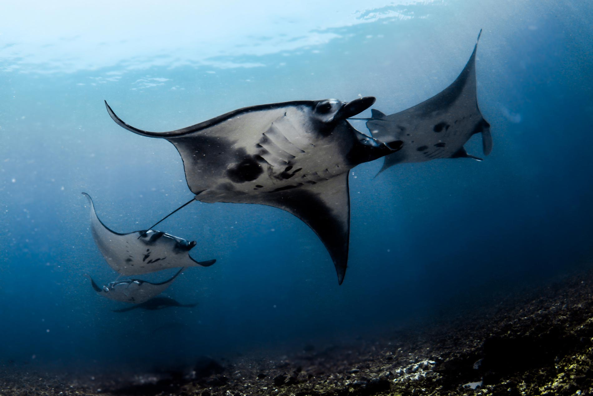 Diving Liveaboards And Day Trips Komodo Dive Center